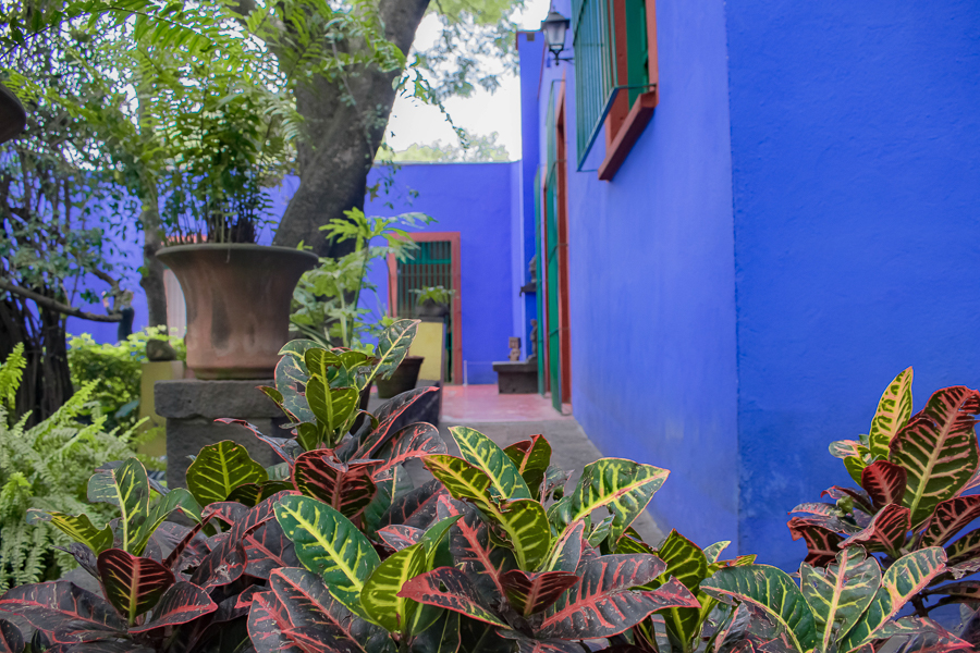 The gardens at the former home of Frida Kahlo, today known as Casa Azul in Mexico City, Mexico