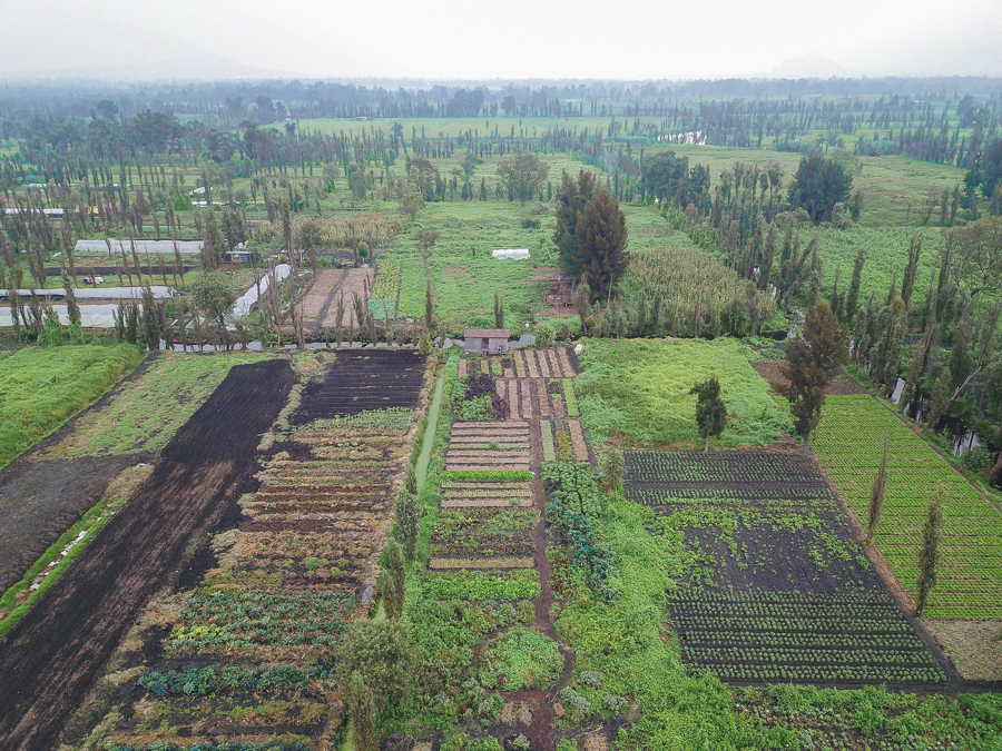 A drone aerial image of the different chinampas along the canals in Xochimilco, Mexico City