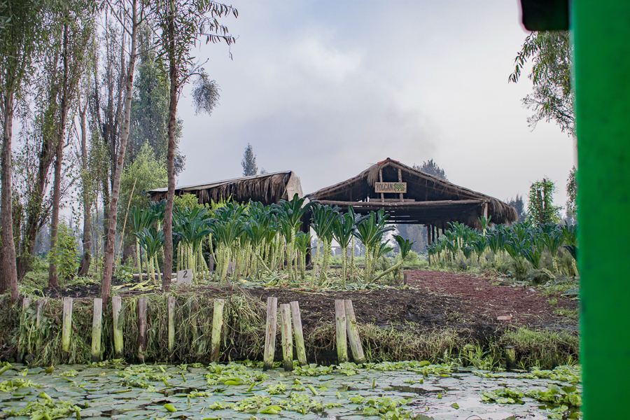 The Yolcan farm in the chinampas of Xochimilco